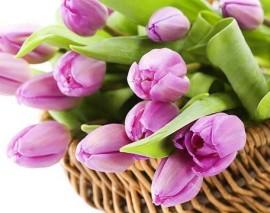 С 8 марта, милые дамы! С Праздником весны!